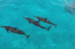 Maldives holiday - dolphins