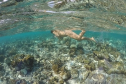 Nature colour bikinis guests snorkeling